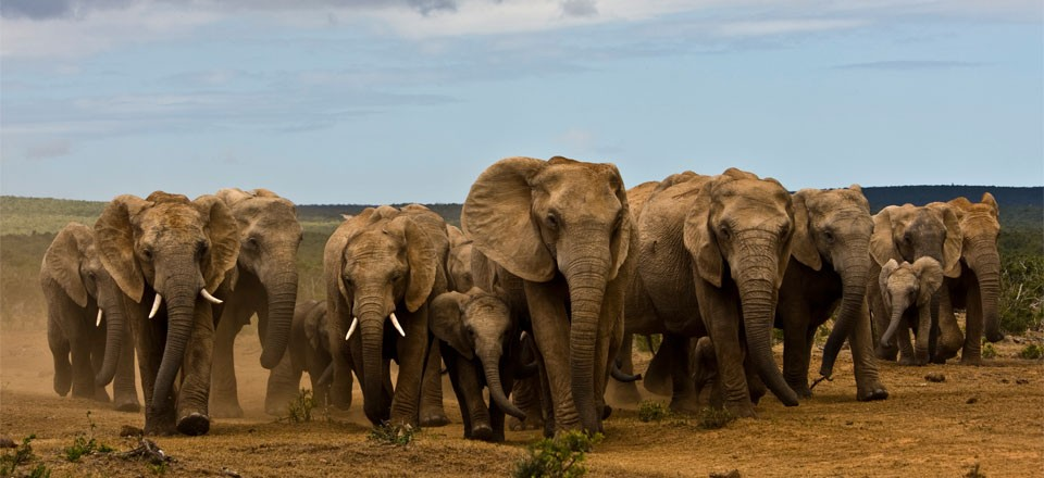 Addo Elephant Park Full Day Tour