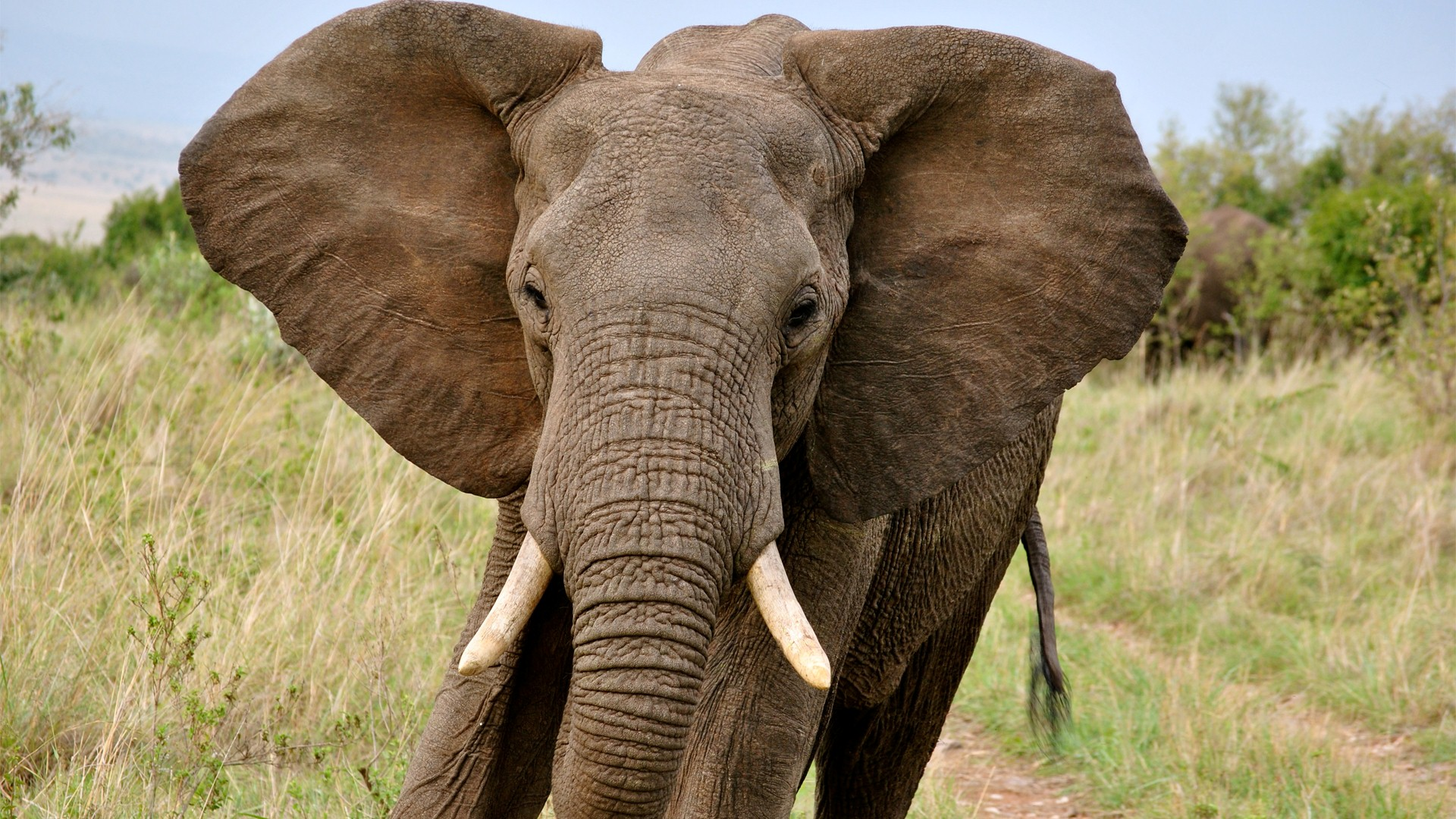 Addo Elephant Park Ful...
